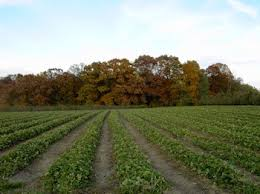 Best Pumpkin Farms In Maryland by Larriland Farm Pick Your Own Fruits And Vegetables At Our Family