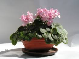 Grow Lamps For House Plants by Houseplant Wikipedia