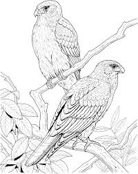 Falcon On The Tree Bird Coloring Pages