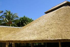 cape reed thatch africa roofing uk ltd