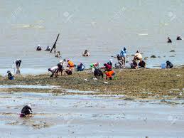 100 Banglamung Fishing And Find Crab Shell And Marine Life At Chonburi