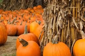 Local Pumpkin Farms In Nj by Best 25 Pumpkin Picking Nj Ideas On Pinterest Pumpkin Farm