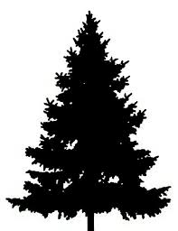 Best Kinds Of Christmas Trees by Best 25 Tree Clipart Ideas On Pinterest Clip Art Felt Tree And