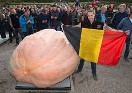Largest Pumpkin Ever Weight by Belgian Man U0027s Pumpkin Sets World Record At A Whopping 2 624 Pounds
