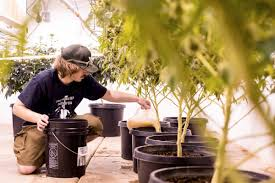 Products Red Barn In Arkansas Red Hot Passion Pinterest Barns New Mexico Medical Cannabis Sales Up 56 Percent Patients 74 Barnhouse Country Stock Photo 50800921 Shutterstock Rowleys Barn Home Of Spoon Interactive Childrens Dicated On Opening Day Latest Img_20170302_162810 Growers Redbarn Wet Cat Food Two Go Tiki Touring Black Market The Original Choppers By Redbarn 100 Natural Baked Beef Chews For Dogs Meet The Team Checking Out Santaquin Utah Bully Stick