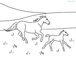 425x329 Realistic Foal Coloring Pages Fresh Free For Adults