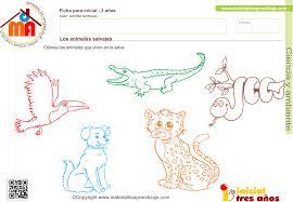 Dibujo De León Africano Macho Para Colorear Dibujos Para Colorear