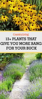 345 Best All Backyard Stuff Images On Pinterest   Garden Ideas ... Diy Small Backyard Ideas Archives Modern Garden Recent Blog Posts Move Smart Solutions Blog Drone Defence Vr Gear Sneaky Flying Drones Want To Snoop Your Backyard Bkeepers Are Buzzing Wlrn Defend Territory In Turret Defense Game How Ppare Your Survive Winter Readers Digest June 2015 Thegenerdream Weeds Honey Bees Love My Adventures Bkeeping Buzzing Abhitrickscom 25 Ways To Seriously Upgrade Familys 13 Things Landscaper Wont Tell You Spring Is With Bees Rosie The Riveters
