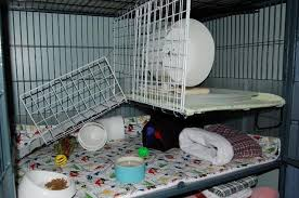 cage setup exles hedgehog central hedgehog pet care owner