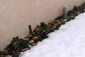 entretien plante grasse d interieur culture des cactus plantes grasses et succulentes articles du