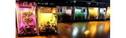 kit chambre culture chambres de culture garden