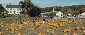 Pumpkin Patch Western Massachusetts by New England Fall Events A Ct Guide The Best Pyo Pumpkin Patches