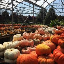 Morgan Hill Pumpkin Patch Hours by Imel U0027s Greenhouse Home Facebook