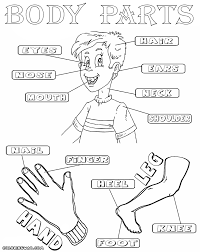 Body Parts Coloring Pages And