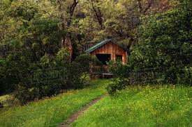 100 House In Forest Dirt Path Leading To Wooden House In Forest Stock Photo