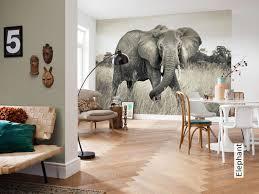tapete elephant tapetenagentur de afrikanische