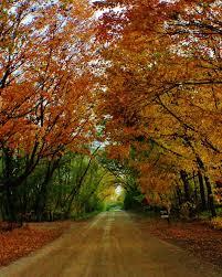 Pumpkin Farms In Channahon Illinois by 19 Best Channahon Minooka Morris Illinois Images On Pinterest