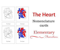 Human Heart Clipart From Homeschool There Is A Notebooking Page Coloring Labeling Worksheet And Anatomy Chart