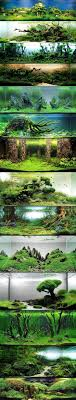 Best 25+ Aquascaping Ideas On Pinterest | Aquarium, Aquarium Ideas ... Photo Planted Axolotl Aquascape Tank Caudataorg New To Hobby Friend Wanted Make An For As Cheap Basic Forms Aqua Rebell Huge Tutorial Step By Spontaneity James Findley Aquascaping Videos The Green Machine Aquarium Beautify Your Home With Unique Designs Aquascape Waterfall Its Called Strenght Of A Thousand Stone Youtube September 2010 The Month Sky Cliff Aquascaping 149 Best Images On Pinterest Ideas Advice Please 3ft Forum