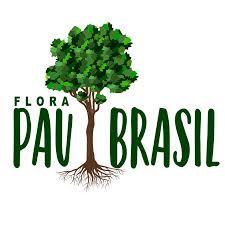 100 Pau Brazil Flora Brasil So Sebastio So Lo Facebook