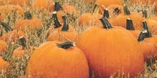 Pumpkin Festival Ohio by Fall Festival Fun In Northeast Ohio