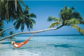 Hammock on beach palm tree white sand