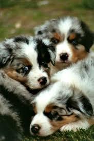 best 25 find pets ideas on pinterest pet tips dog list and pet