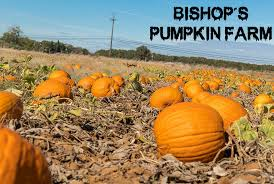 Pick Of The Patch Pumpkins Santa Clara by 4 Local Halloween Attractions To Haunt Up Some Fun U2013 The State Hornet