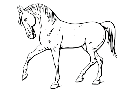 Horse Colouring Pages Foal Coloring Horses Printable Free