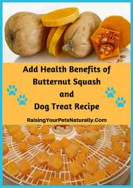 Turkey And Pumpkin For Dog Diarrhea by Healthy Dog Treats Archives Raising Your Pets Naturally With