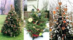 Home Depot Christmas Light Recycling 2017 Real Trees Types