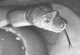 Snake Skin Shedding Frequency by Diseases Of The Integumentary System Veterian Key