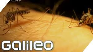 tipps gegen stechmücken galileo prosieben