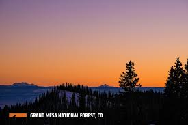 Christmas Tree Permits Durango Colorado by Grand Mesa National Forest Outthere Colorado