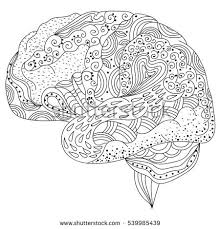 Human Brain Doodle Decorative Curves Creative Mind Learning And Design Adult Coloring Book