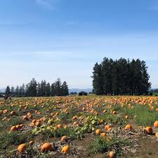 North Plains Pumpkin Patch by Lakeview Farms Home Facebook