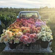 Best 25 Bunch Of Flowers Ideas On Pinterest
