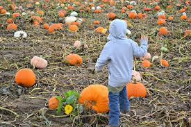 Pumpkin Patches Near Colorado Springs Co by Visiting Anderson Farms Fall Festival In Erie Colorado Building