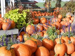 Pumpkin Patches In Cincinnati Oh by 11 Best Family Friendly Pumpkin Patches In Cincinnati