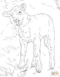 Lamb Coloring Page Printable Pages Click The Crippled Animal