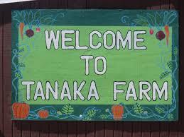 Tanaka Pumpkin Patch Irvine by Tanaka Farms Family Orange County Ca