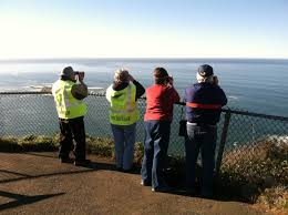 Whale watching week returns Dec 27 31 as whales migrate past