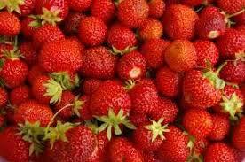Ergle Christmas Tree Farm Oklahoma by Pick Your Own Strawberries Strawberry Plants Org
