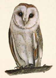 Wildlife, Animal And Nature Art, Portraits Of Small Pets, Birds ... Barn Owl New Zealand Birds Online Audubon California Starr Ranch Live Webcams Barn Red My Pet Pupo The Barn Owl Mouse Youtube Babyowl Explore On Deviantart Adopt An The Wildlife Trusts Wikipedia Owlrodent Research Project Vineyard Owl Lookie My Pet Growing Up Growing Up Album Imgur Made Out Of Wood And Plant Materials I Found At Parents
