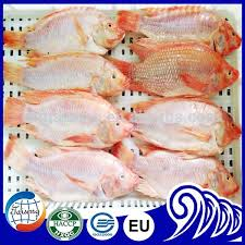 Frozen Red Tilapia Fish Price Suppliers And Manufacturers At Alibaba