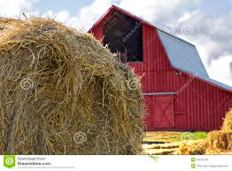 Bales Of Hay By Red Barn Stock Photo. Image Of Autumn - 16615742 3 Barns Lessons Tes Teach Hay Barn Interior Stock Photo Getty Images Long Valley Heritage Restorations When Where The Great Wedding Free Hay Building Barn Shed Hut Scale Agriculture Hauling Lazy B Farm With Photos Alamy For A Night Jem And Spider Camp Out In That Belonged To Richardsons Benjamin Nutter Architects Llc Filesalt Run Road With Hoodjpg Wikimedia Commons Press Caseys Outdoor Solutions Florist Cookelynn Project Dry Levee Salvage