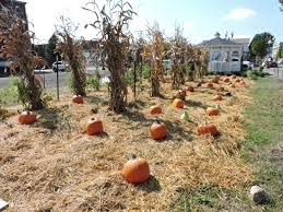 Pumpkin Patch Pittsburgh 2017 by Martins Ferry Gets Spruced Up For Fall News Sports Jobs The