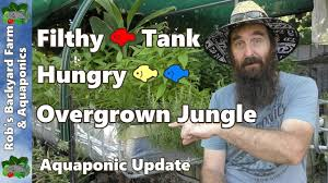 Diy Aquaponics Garden Youtube Aquaponics Australia