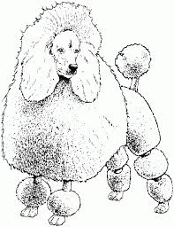 Dog Coloring Pages Printable Bet Hound Page Sheet