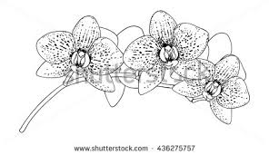 orchid clipart black and white 5
